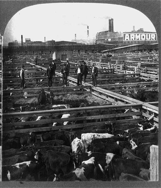 Chicago_stockyards_cattle_pens_men_1909